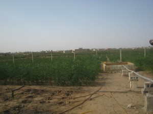 Pilot Project Moringa
