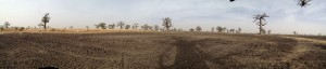 Panorama view of moringa farm- totally organic soil