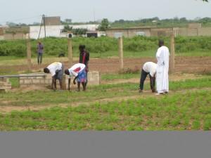 Planting Moringa